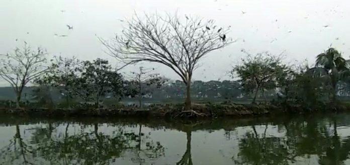 পাখির গানে মুখরিত অরুনিমা রিসোর্ট গলফ ক্লাব ও ইকোপার্ক