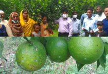 পাঁচ একর জমিতে মালটা চা'ষে সফলতার স্বপ্ন দেখছেন নারী চা'ষী আফরোজা