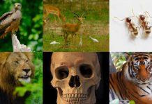 """মানুষের মত বা'কক্ষ'মতা অন্য প্রাণীদের দেওয়া হলে আজ """"মানুষের বা'চ্চা"""" ভালো গা'লি হতো"""
