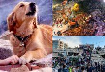 তুরস্কে শ'ক্তিশা'লী ভূমিক'ম্পে নিহ'ত মানুষের সংখ্যা বেড়ে ৭১